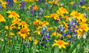 Wild-Flowers-Images_2